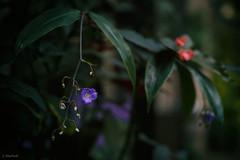 longwood-57 (Jen MacNeill) Tags: longwood gardens garden kennettsquare pennsylvania pa plants plant nature greenhouse flower