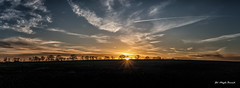 Sunset (Magda Banach) Tags: canon canon80d contrail horizon clouds countryside dramatic field landscape poland silhouette sky sunbeams sunset treeline outdoor