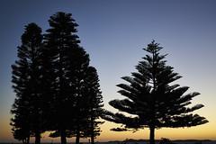 Trees @ Dusk (Stueyman) Tags: sony alpha ilce a7 a7ii wa westernaustralia australia sunset sky perth rockingham 55mm za zeiss