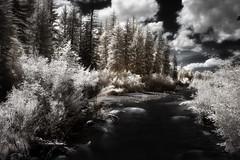 wind river (greg westfall.) Tags: gregwestfall wyoming infrared windriver 720nm 10stopneutraldensity extralongexposure pine trees