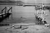 Aquatic Cove, San Francisco (Postcards from San Francisco) Tags: contaxt2 sanfrancisco trix film analog diafine