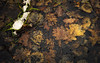 Frozen Past (Netsrak) Tags: leaves ice dirt decay transience winter frozen