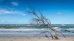 Ostsee  (20) (berndtolksdorf1) Tags: deutschland mecklenburgvorpommern ostsee dars weststrand wasser baum himmel outdoor strand sand