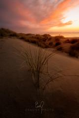 Duneset (ernogy) Tags: heceta hecetabeach oregon dunes ernogy sunset sunrise sky pastel grass beach beaches pacific