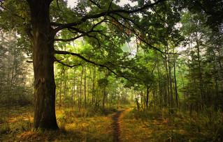 Forest pathways # 2