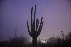 Tum033_small (patcaribou) Tags: tucson tumamochill sonorandesert fog cactii saguarocactus