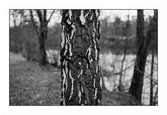 L'Oise (Punkrocker*) Tags: nikon nikkormat ftn nikkor 50mm 502 h film ilford pan 400 nb bwfp river landscape tree zen bokeh oise auvers valdoise france