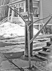 Pizza Tree - Ottawa 02 18 (Mikey G Ottawa) Tags: mikeygottawa canada ontario ottawa street city winter snow ice pizzabox pizza tree box trash garbage bw