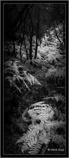 La Palma, Horizon 202, Color Negative analog 24x56mm