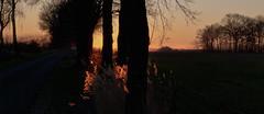 7 | 2 (edvard kien) Tags: morning orange color fence trees gras sky venn border westland berkelland countryside gelderland lumix lx5 horses edvardkien winter sun zwillbrock