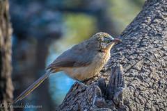 pajaro (barragan1941) Tags: aves fauna pajaros ranthamhore birds