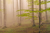 And after the winter, another spring will come. (I.Z.82) Tags: nature forest mist atmosphere color fuji longexposure wood sundaylights