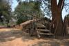 IMG_1748a (sensaos) Tags: india sensaos travel chhattisgarh 2013 asia
