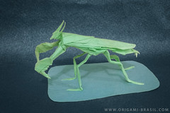 19/365 Boxer Mantis by Manuel Sirgo (origami_artist_diego) Tags: origami origamichallenge 365days 365origamichallenge manuelsirgo mantis boxer boxermantis