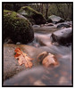 Brock_Bottoms_PROVIA-2 (D_M_J) Tags: autumn river leaf brock bottoms winsnape brook long exposure water film camera slide 6x7 medium format colour 120 roll mamiya rb67 pro 65mm sekor c 3 stop nd filter tetenal colortec e6 epson v850 vuescan