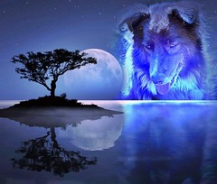 Shizandra & The Moon (Feeling Better...Still Slow To Comment!) Tags: ddc 2282 superbluebloodmoon moon photofacefun shizandra tree lake dog canine
