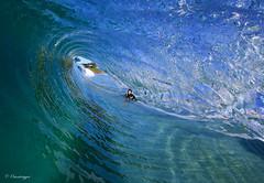 Tunnel View (Omnitrigger) Tags: surf wave swell barrel tube waterhousing decompresean