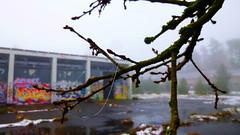 Lonely Bough (obscure.atmosphere) Tags: snow schnee nieve neige 雪 눈 nebel fog 霧 안개 neblig foggy silent hill dunst mist niebla bruma brouillard brume ruine ruin ruina industrie industry industria eerie creepy scary weird sinister spooky horror ホラー 공포 verlassen empty abandoned obscure unheimlich 怖い 소름 atmosphere atmospheric atmosphäre atmosphärisch horripilante siniestro terrifiant horreur natur nature naturista naturaleza 自然 자연 wald forest bosque selva foret 森林 숲 woods baum bäume tree trees winter invierno hiver 冬 겨울 hamburg deutschland