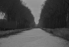 Winterscape (johan van moorhem) Tags: belgium belgique belgië flanders vlaanderen westvlaanderen damme brugge canalbruggesluis kanaalbruggesluis winter lastdayofdecember lastday monochrome
