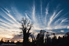 Fingers and a Hand (Michael Guttman) Tags: clouds trees fingers hand silhouette springfield oregon sunset sky
