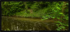 Leica M9 with summilux 35/1.4 ASPH (Dierk Topp) Tags: bäume bach leicam9 leicasummilux3514asph reinfeld trees wald wasser wood