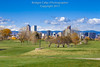 9th Hole Denver City Park Golf Course in the Fall (Bridget Calip - Alluring Images) Tags: 2017 alluringimagescolorado autumn bridgetcalip citypark cityparkgolfcourse cityandcountyofdenver colorado denver denverskyline fallcolor ferrillake frontrangemountains milehicity milehighcity mtevans october queencityoftheplains rockymountains architecture blueskies cashregisterbuilding cityscape coniferoustrees crane downtowndistrict fallfoliage fountain golfcourse greengrass landscape leisure outdoors practice publicpark puttinggreen recreationalarea rough skyline skyscrapers snowcoveredmountains sport urbanskyline