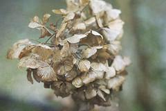 Week 3/52 (Tres Seis Cinco) Tags: week3 macro plant botanical textured texture