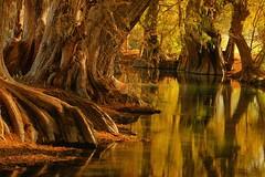 DREAMING AGAIN. (NIKONIANO) Tags: water lake lago surreal forest si mexico mexicano lamañana grouptripod