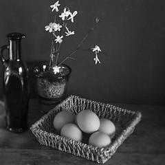 all the eggs in one basket! (Wendy:) Tags: eggs basket jasmine winter flowering mono bottle dark glass