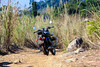 North East India Motorcycle Ride With Red Panda Adentures (Blazing Canon) Tags: redpandaadventures himalayas northeastindia indiamotorcyclerental indiamotorcycletour assam nagaland sikkim bhutan