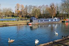 Kennet & Avon Canal and Boating Lake, Newbury (baldychops) Tags: newbury berkshire westberkshire sun sunny sunshine winter outdoor town canal ka kennet avon kacanal kennetavon kennetavoncanal kennetandavoncanal swan water duck lake boating boatinglake park victoriapark