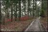 Balade sous la pluie (reko22) Tags: forêt pluie paysages