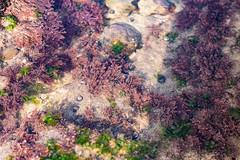 Rock Pools (ARPhotography_) Tags: birlinggap beach rockpools shells waterlife sea seascape landscape macro sealife