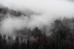 mist flowing through the forest tops (151th) Tags: mist fog mood noir forest winter russia sochi mountains rainy