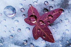 Diamonds of nature (SonjaS.) Tags: macromondays diamondsofnature tropfen spiegelung reflektion blatt efeu winter regen rain lupe