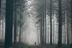 The man in the fog (hoppstaedterfabian) Tags: saarland germany deutschland wald forest trees tree bäume baum fog foggy mood moody nebel neblig nature natur weroamgermany woods wood weg canon canoneos60d landscape landschaft landschaftsaufnahme landscapephotography landschaftsfotografie