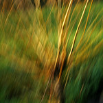 ICM-Intentional Camera Movement thumbnail