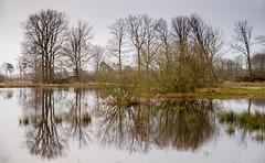 _IMG3937 (Henk de Regt) Tags: nederland veluwe gras water bomen landschap the netherlands gelderland natuur nature landscape grass bos forest trees zonsopkomst sunset sundown zonsondergang swamp