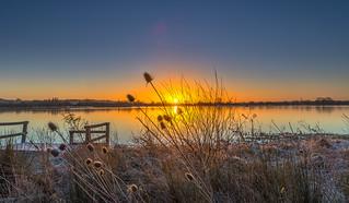 Teasel Sunrise