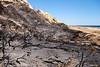 Doñana se quema (pericoterrades) Tags: doñana parquenacional huelva mazagón