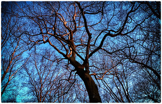 sunglow in the treetop