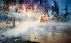 Mist (augustynbatko) Tags: mist lake nature fog landscape birds swans sky clouds tree trees view water winter frost