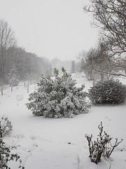 28/28. Plus de trente ans après .... la neige. Pour le dernier jour de février. (Marie-Hélène Cingal) Tags: