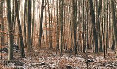 Winter Forest (Krüger Fotografie) Tags: winter forest wald schnee sonne sun orange blätter leafes stamm warm outdoor nikon nikond5100 drausen natur nature season lägerdorf bäume baum trees photography sigma