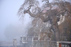 matin brumeux... (jackie bernelas) Tags: lac mist brouillard italie italia orta lacdorta