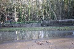 IMG_3579 (Jeff And) Tags: water watermain burst flood northwickpark harrow brent sudbury