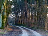 kurvig- winding (Anke knipst) Tags: holm holmersandberge spurbahn weg path abendlicht dusk light