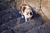 cat 52 (8pl) Tags: chat escalier rijeka ville marches regarddechat mur portraitdechat portrait