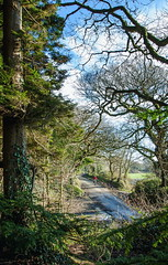 2018 Bike 180, Ride 2, 11th January. (Photopedaler) Tags: 2018bike180 cornishcycling ruralscenes trees woodland rural countrylanes bicycleriding wintercycling wintersunshine