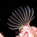 Barnacle feeding #marineexplorer